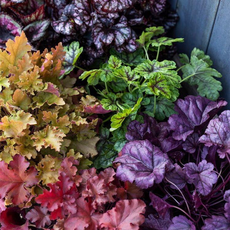 Høstbilde blomster Hageland