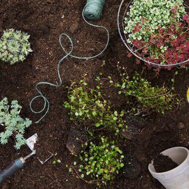 Hageland Klingsheim Jord og planter