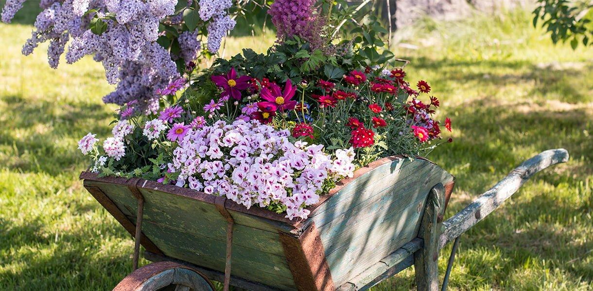 Bilde av forskjellige sommerblomster