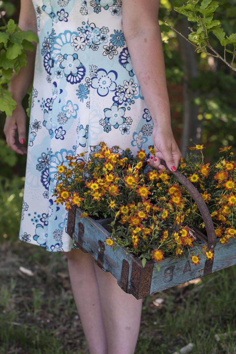 Bilde av sommerblomster, bidens