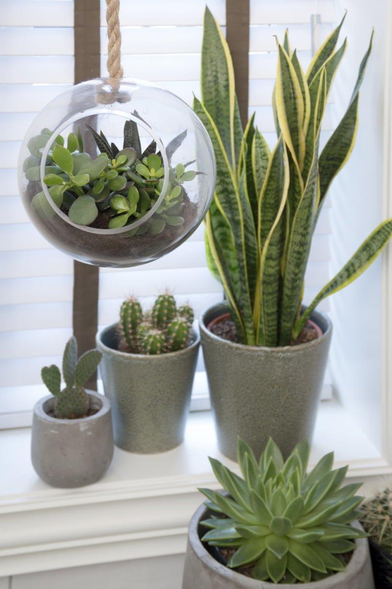 Grønne inneplanter, kaktus og sukkulenter, kaktus og ulike grønne planter i innepotter