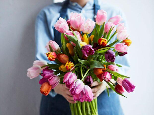 tulipanbukett i ulike farger