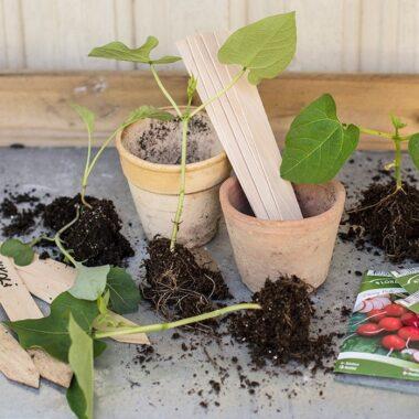 så frø etikett planterslag redskap frø så