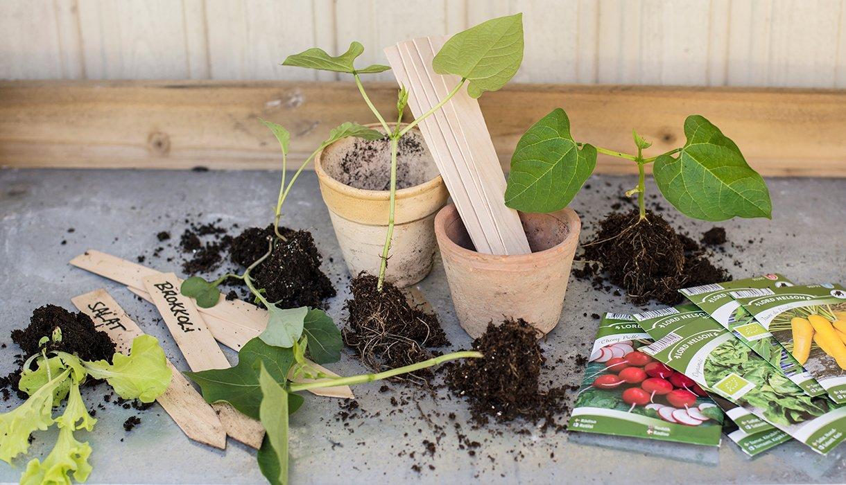 Frøpakker og stiklinger med potter og etikett for forskjellige planteslag