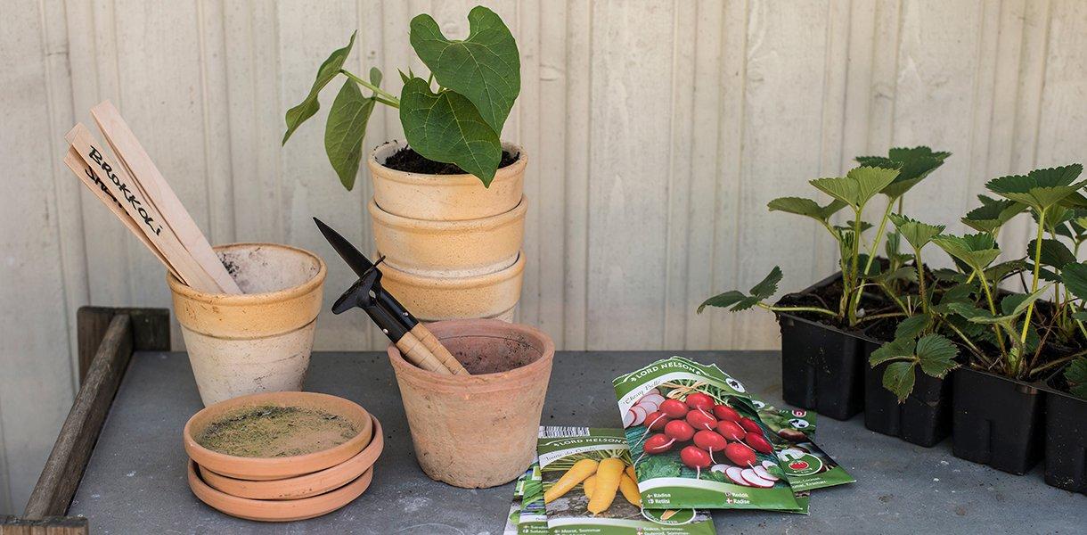 Frøpakker med redskap med krydderurter og blomster i potter