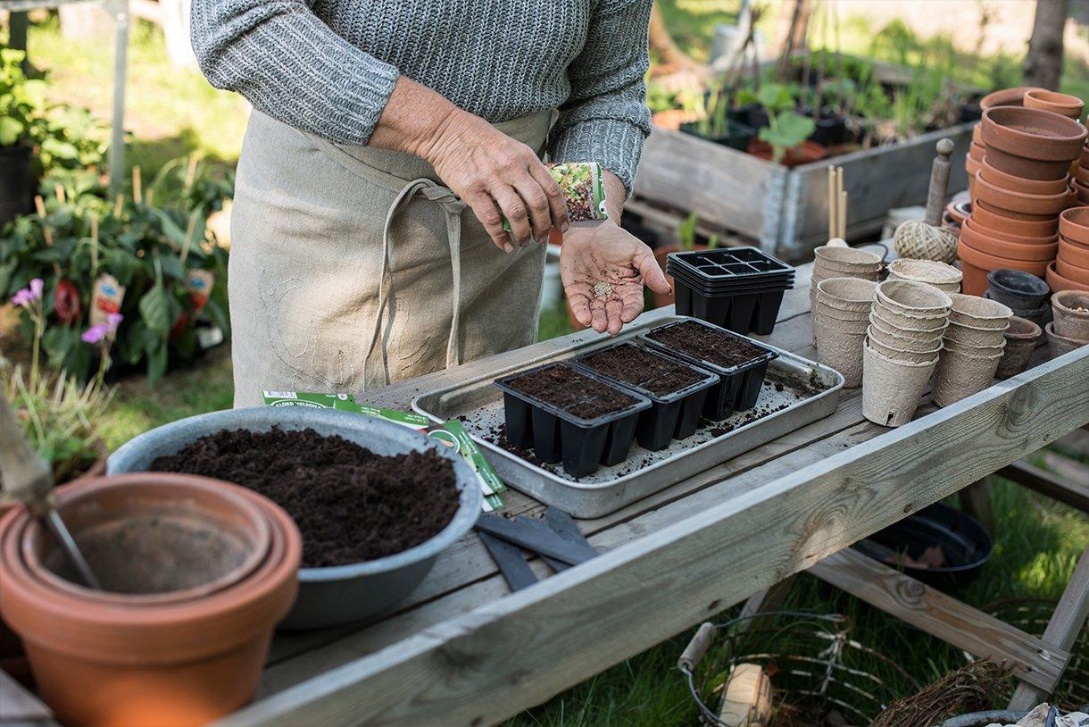 dame som legger frøene i pottene med såjord.