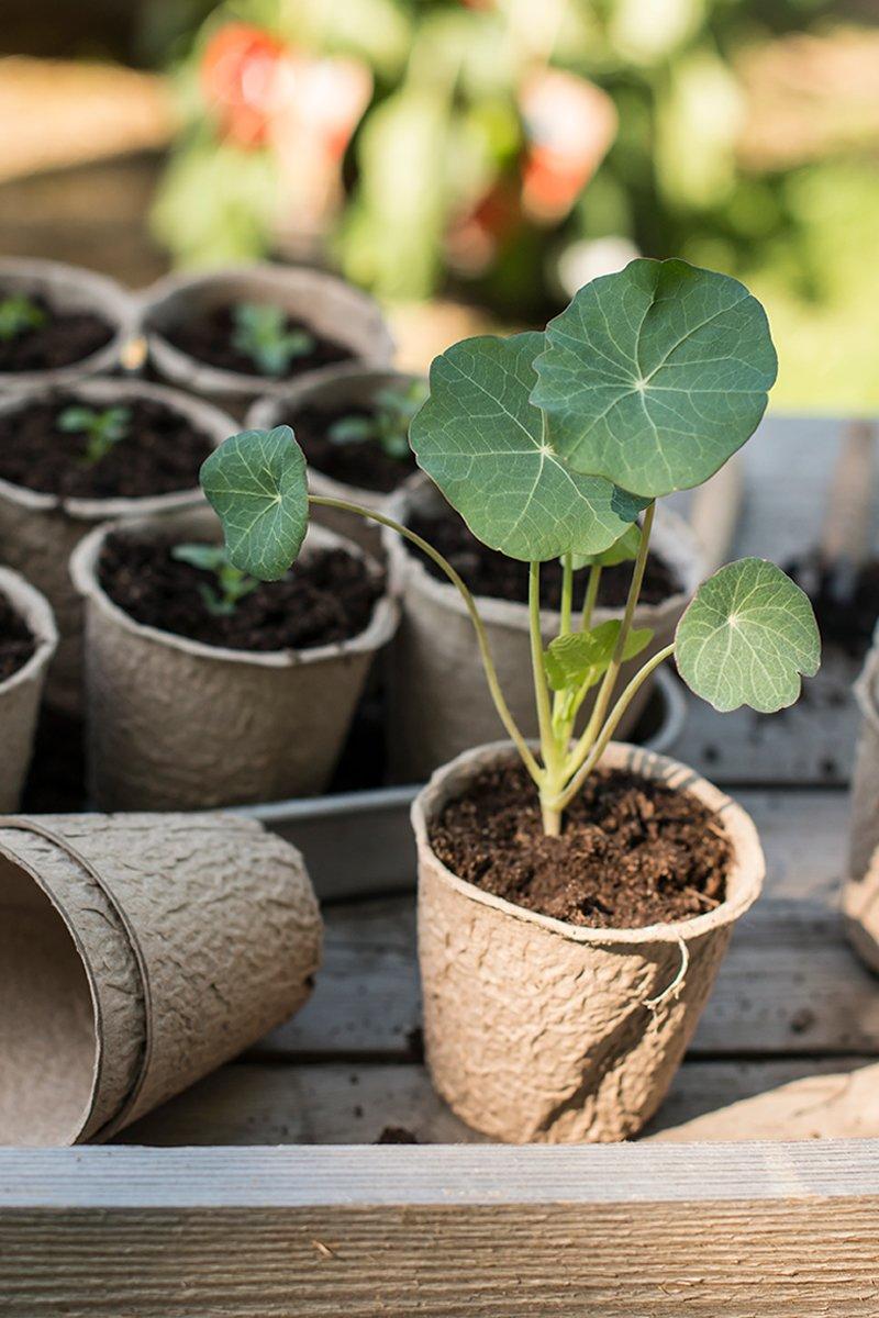 Fylte potter med såjord til planting så frø