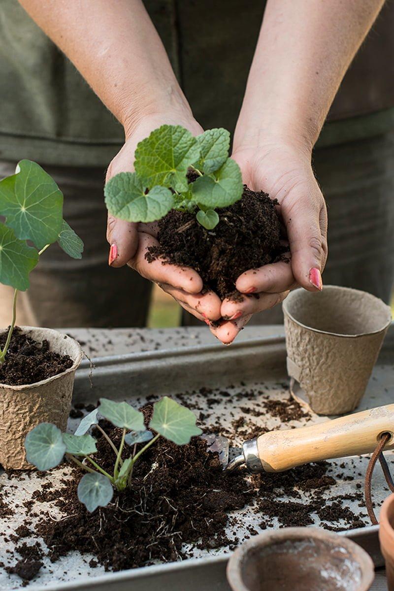Nærbilde av stiklinger, potter og pappotter med såjord og hageredskap