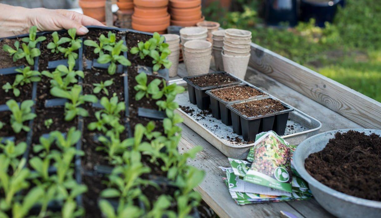 Potter og pappotter fylte med såjord med frøpakker og stiklinger