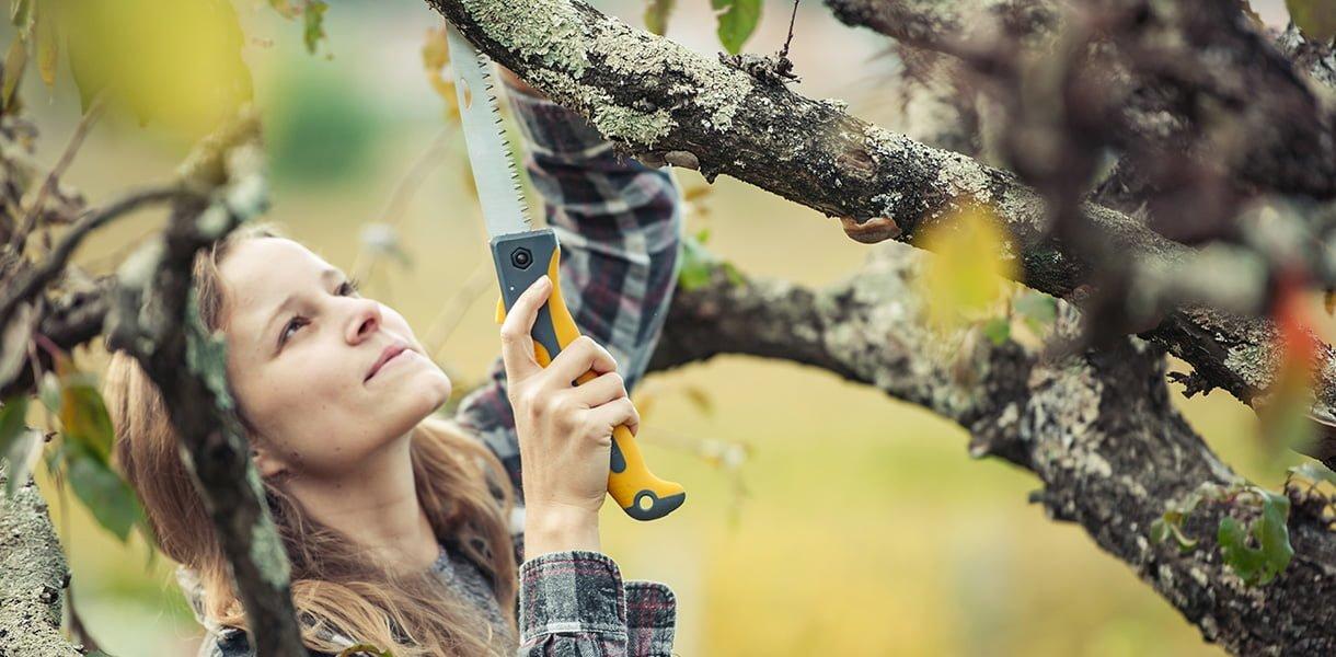 Kvinne beskjærer frukttrær med liten sag