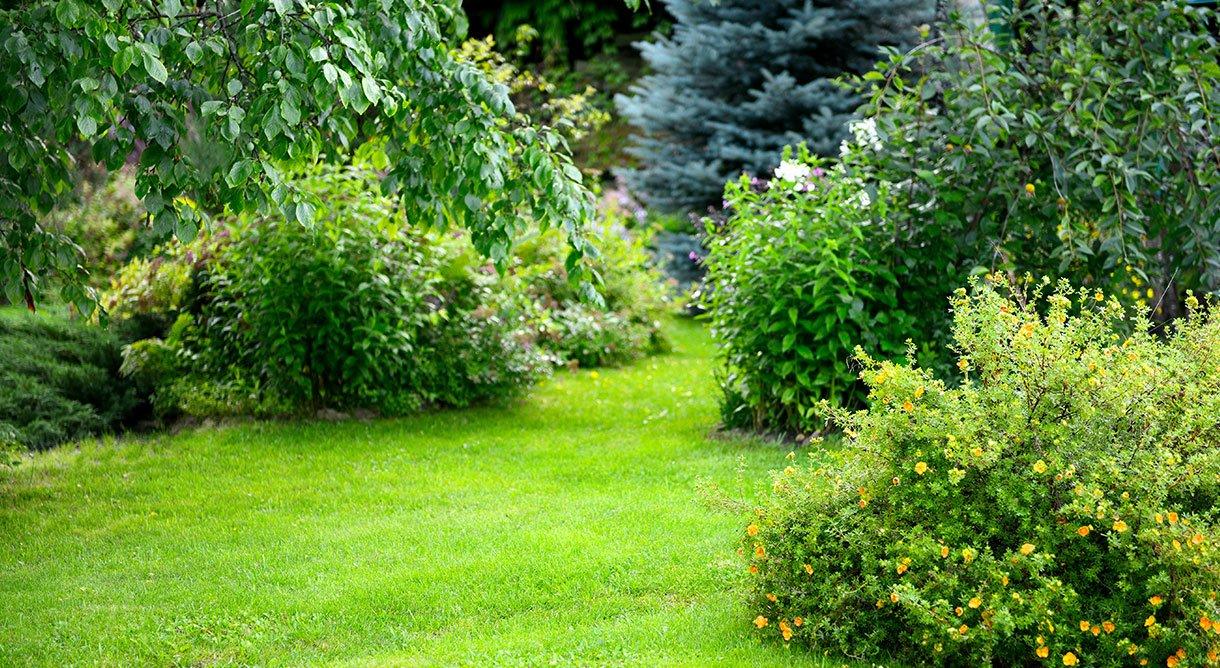 hagemiljø busker trær grønt plen