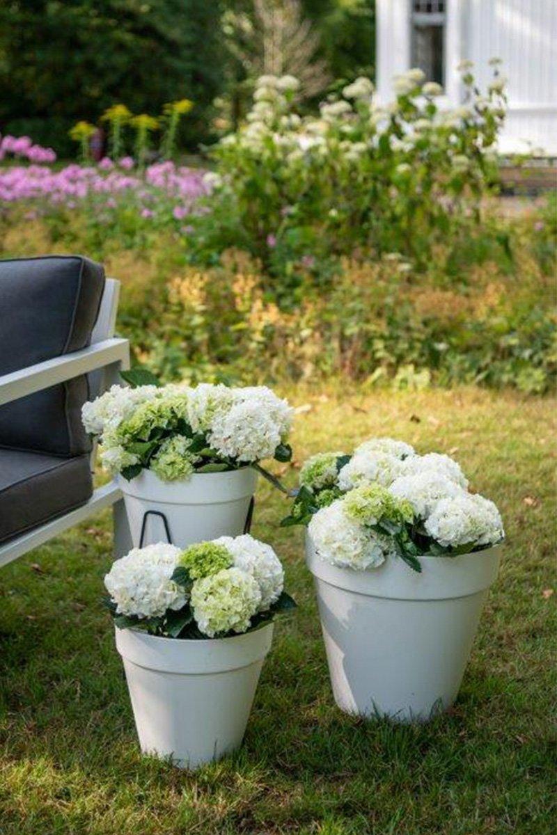 hvite krukker med hortensia på plen