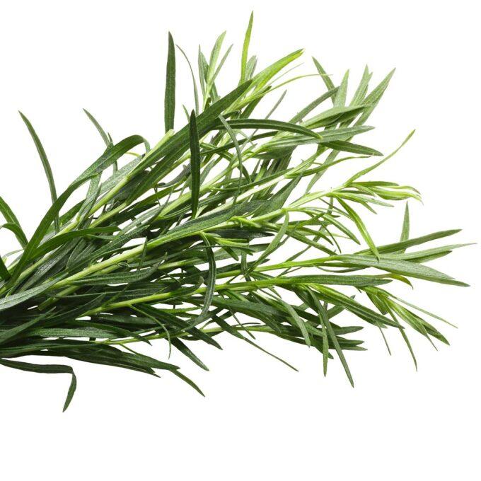 Artemisia Dracunculus Estragon krydder
