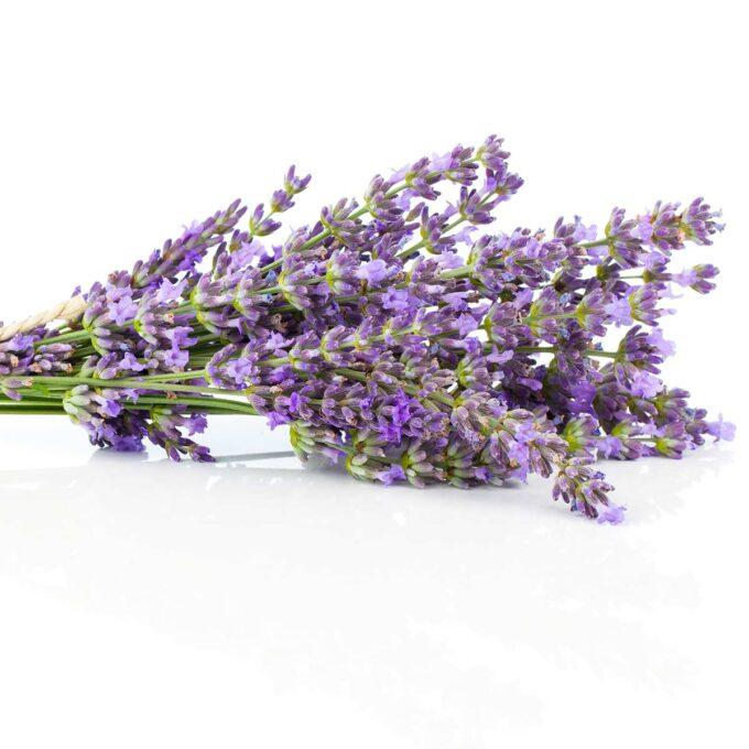 En bunt blomstrende lavendel liggende på bord