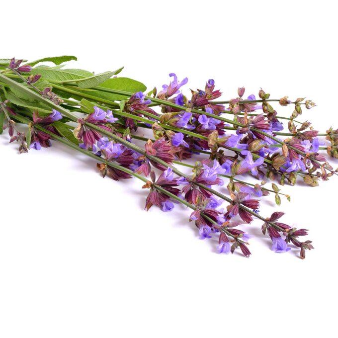 Bunt med blomstrende salvie, klar til bruk