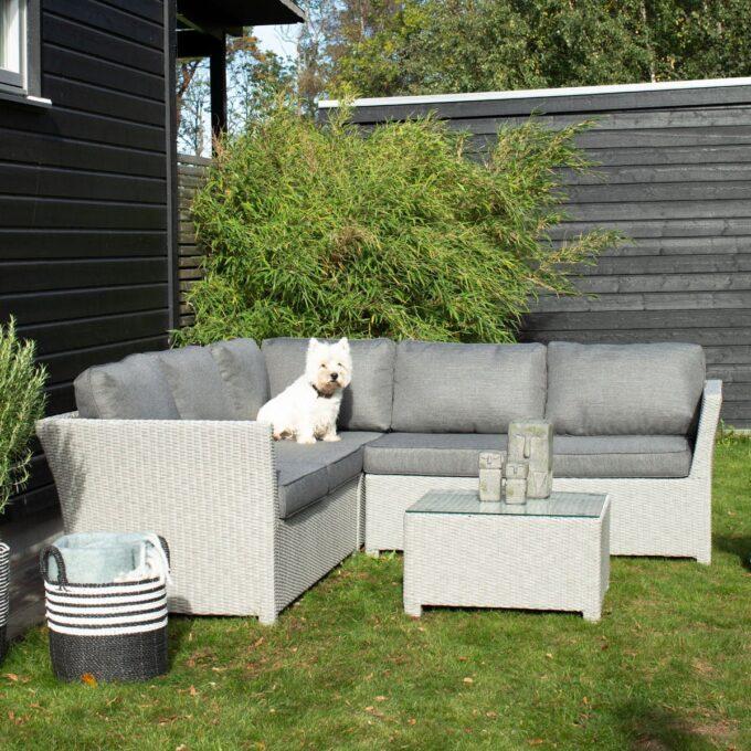 Hvit hund som sitter på hjørnegruppe Adamas i lysgrå kunstrotting i en grønn og solfylt hage