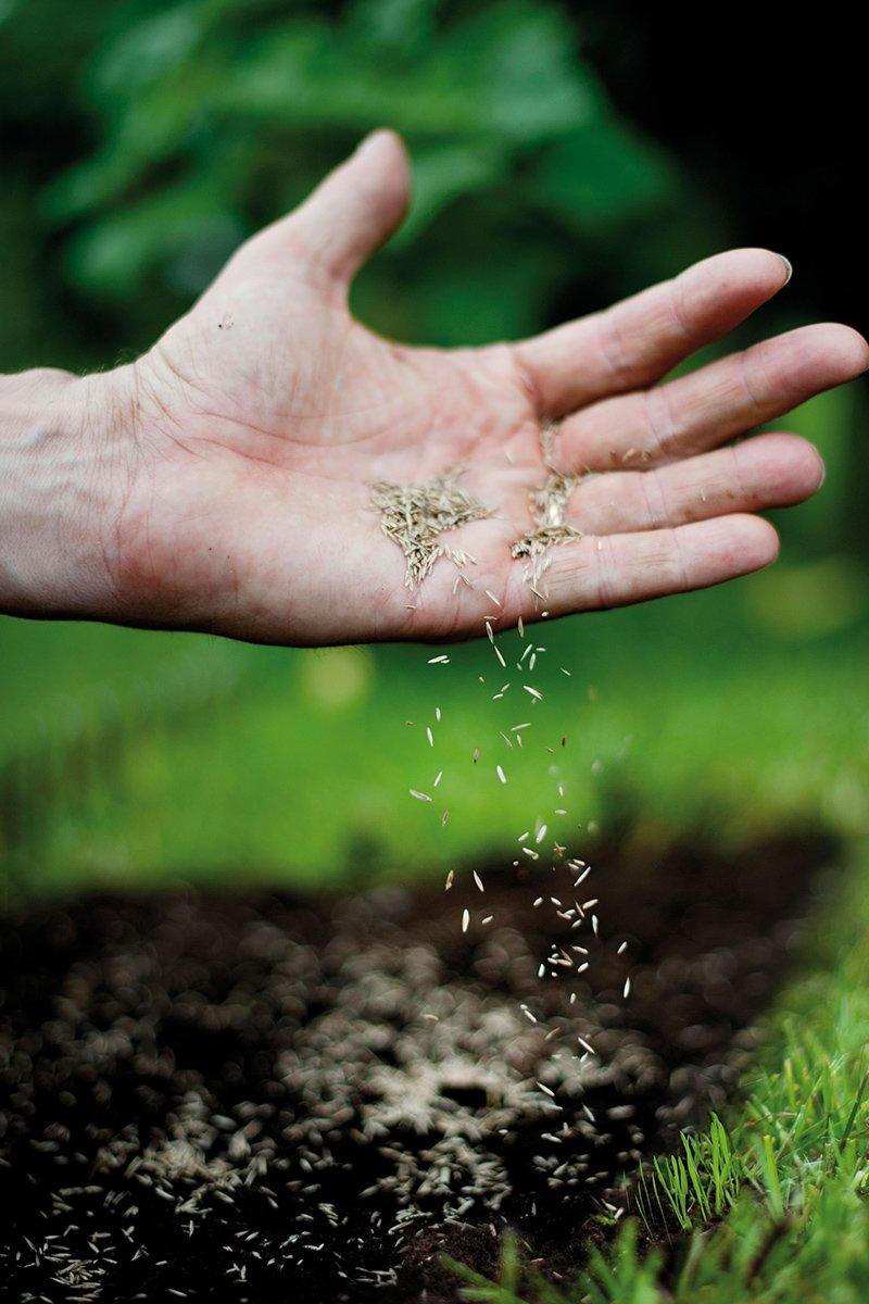 Hånd med plenfrø med jord og plen