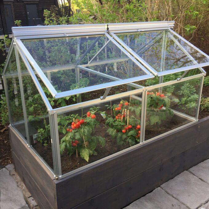 Gaia balkongdrivhus med glassover tomatplanter med modne tomater
