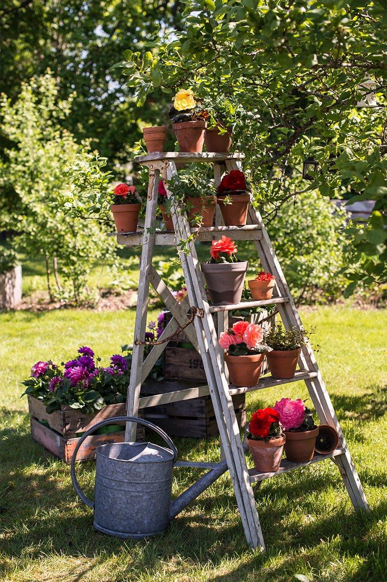 Begonia i flere farger i potter og plantekasse stilt ut på gardintrapp i tre