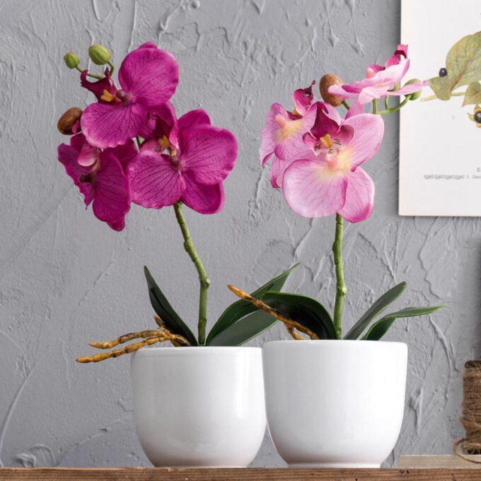 orkideer i blomsterpotter tusca i keramikk, matt hvit, med diameter 10 cm