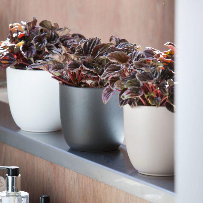 ulike Tusca blomsterpotter med planter i