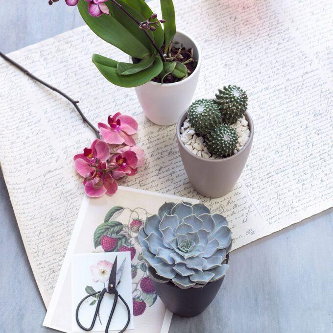 blomsterpotter med kaktus og planter og annen bordpynt