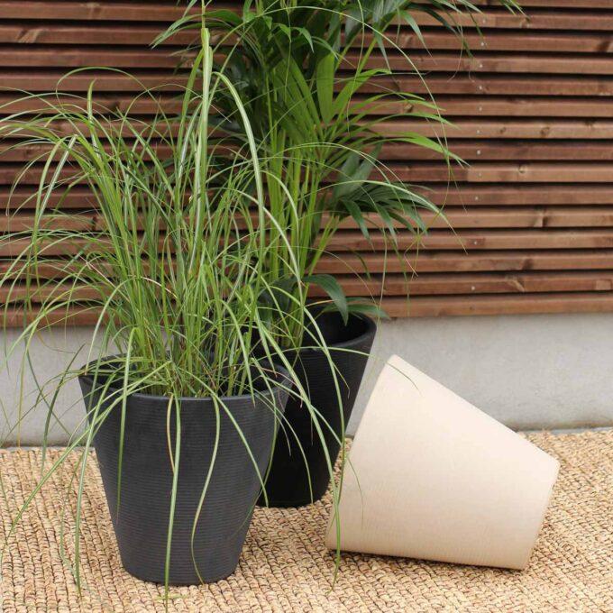 sort, grå og hvit potte Cavalleros med grønne planter