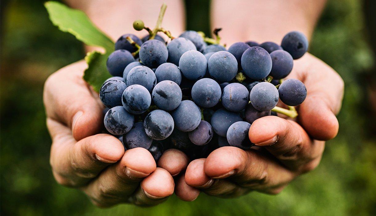 klase med blå druer i hender
