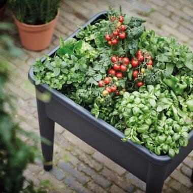 Elho minidrivhus og plantekasse på ben, full av friske urter og tomatplanter med tomater