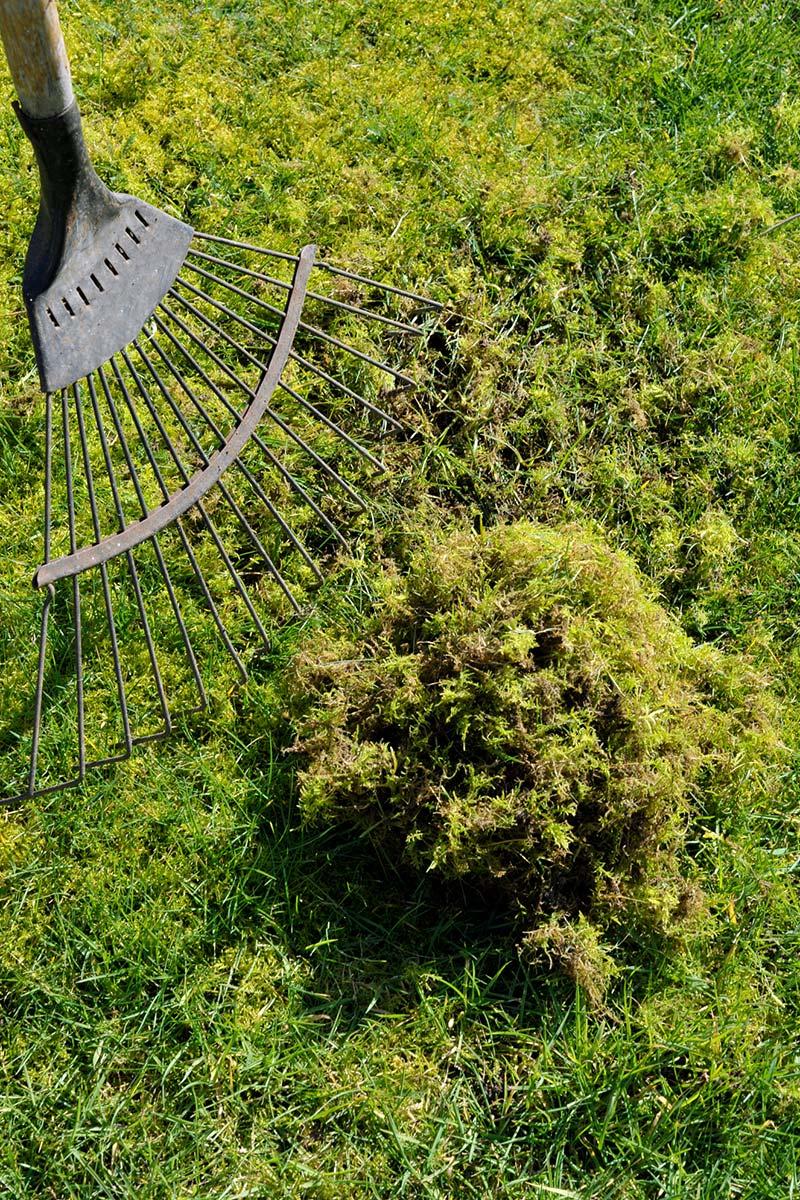 gressplen med mose