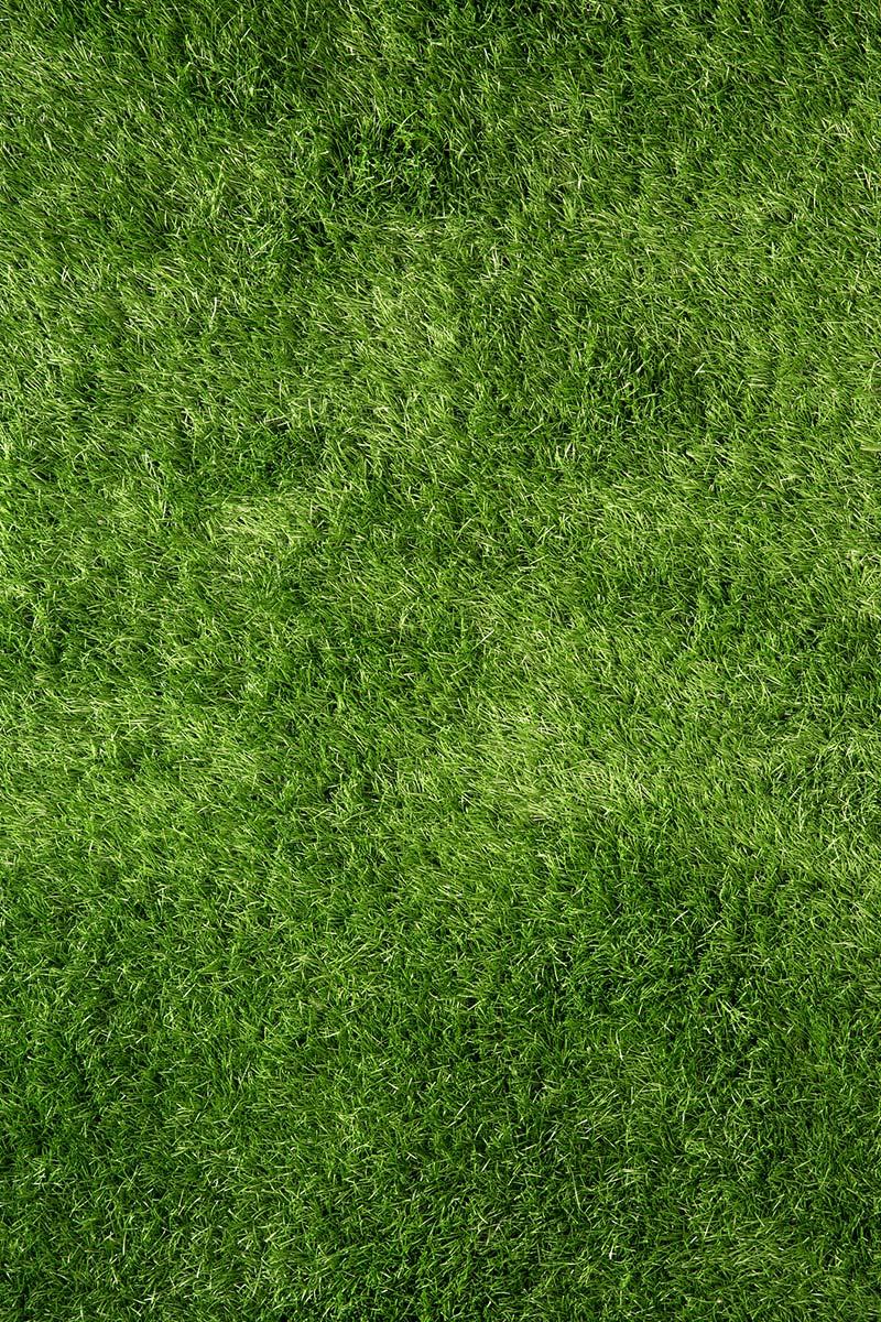 Grønn og frisk gressplen uten mose