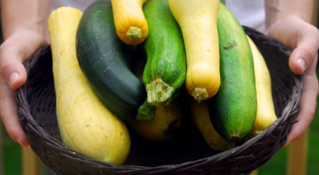 Grønn og gul squash høstet i kurv