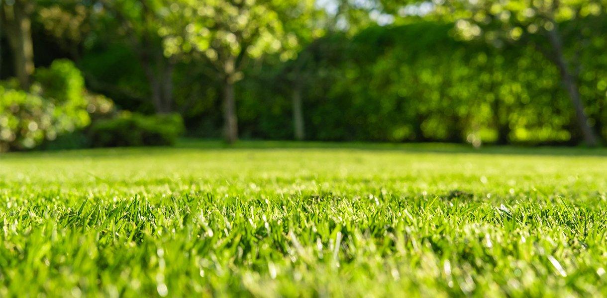Grønn gressplen med trær i bakkant