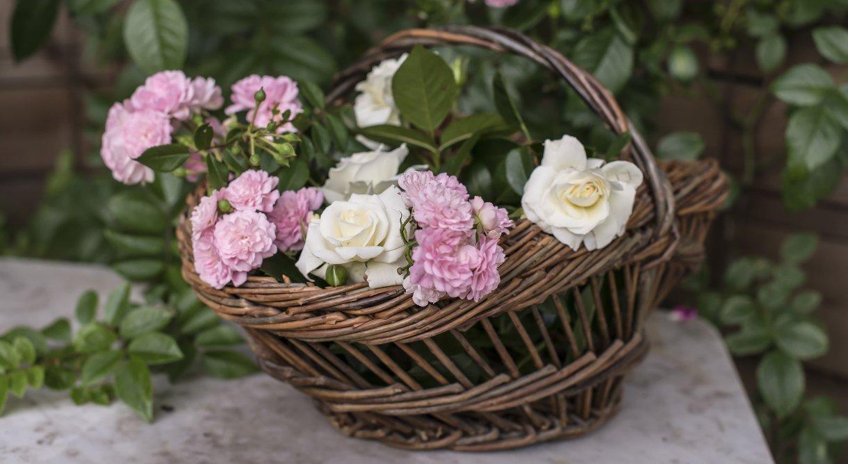 Kurv i kunstrotting full av velduftende og vakre roser