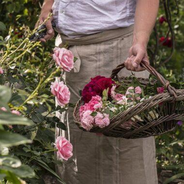 Rosa og røde hageroser i kurv i kunstrotting
