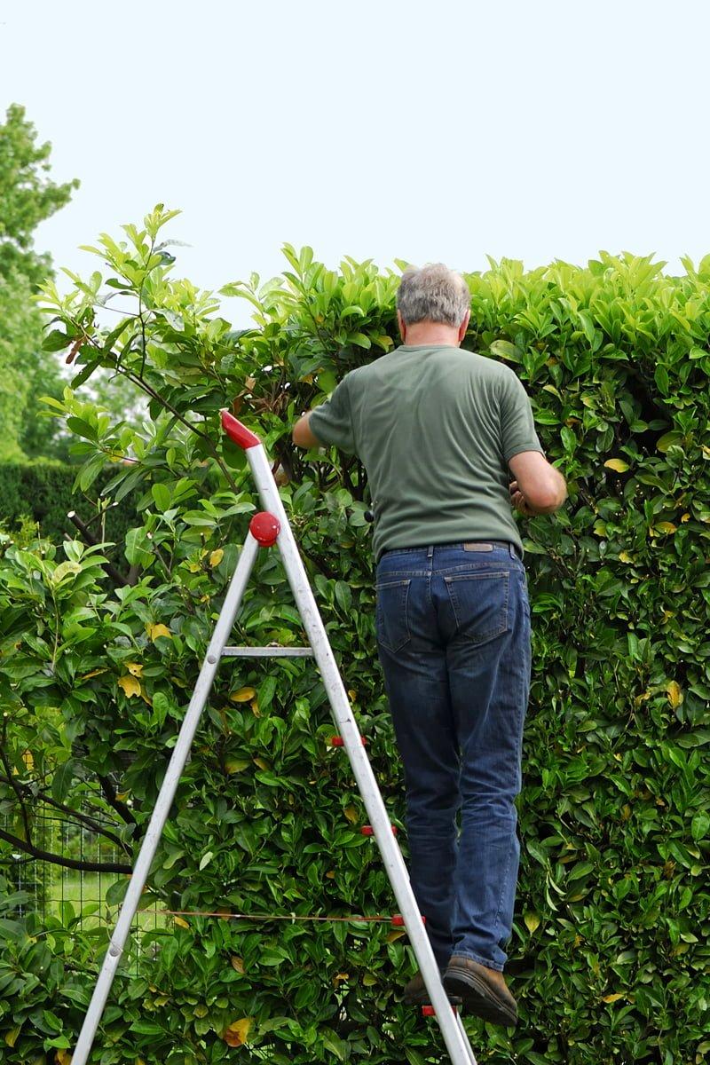 Mann på gardintrapp klipper hekk