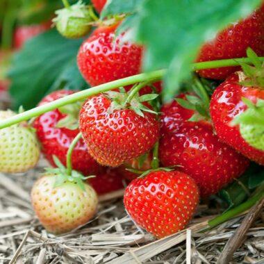 røde og hvite jordbær under blader