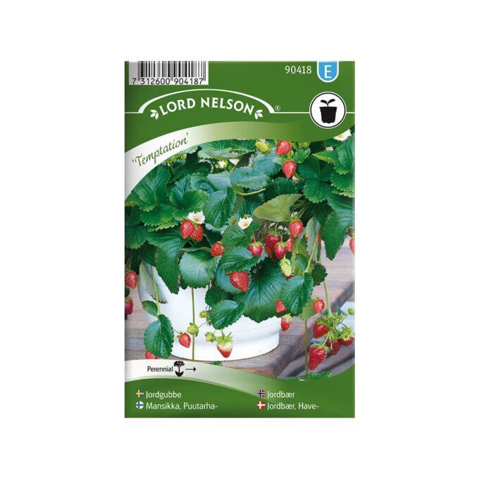 Jordbær Temptation - frø fra Nelson Garden