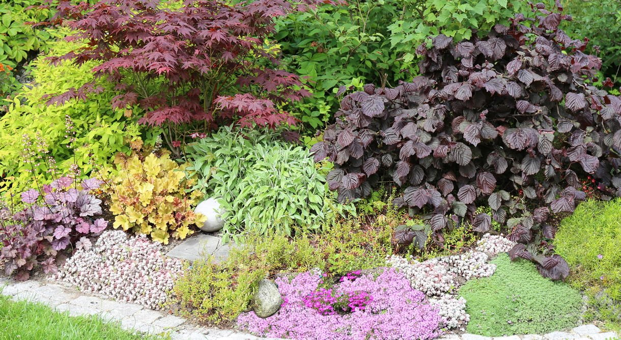 Et velstelt bed med lave blomster i forkant og busker i bakkant