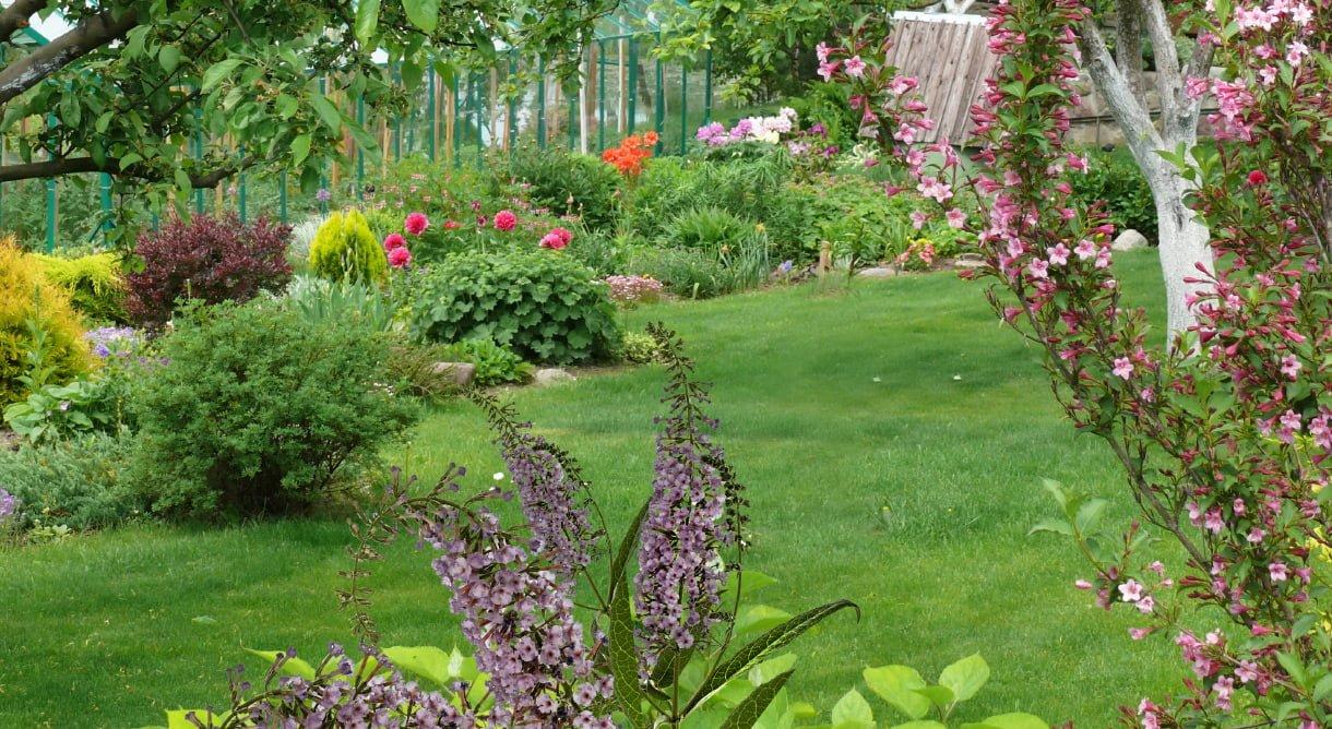 Plen, fargerike blomster, busker, hekk og trer i hage