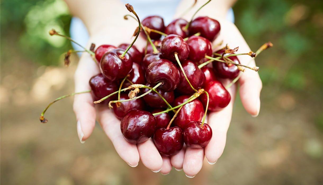 hender som holder mange kirsebær