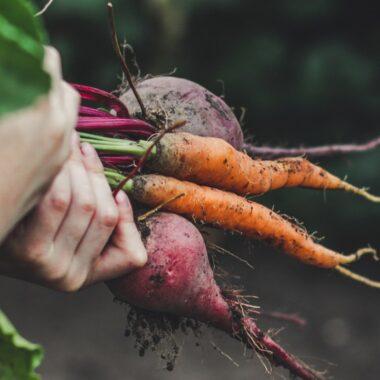 Kjøkkenhage dyrke egenprodusert grønnsaker gulrot reddik