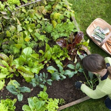 Kjøkkenhage dyrke egenprodusert grønnsakker bær krydderurter drivhus pallekarm