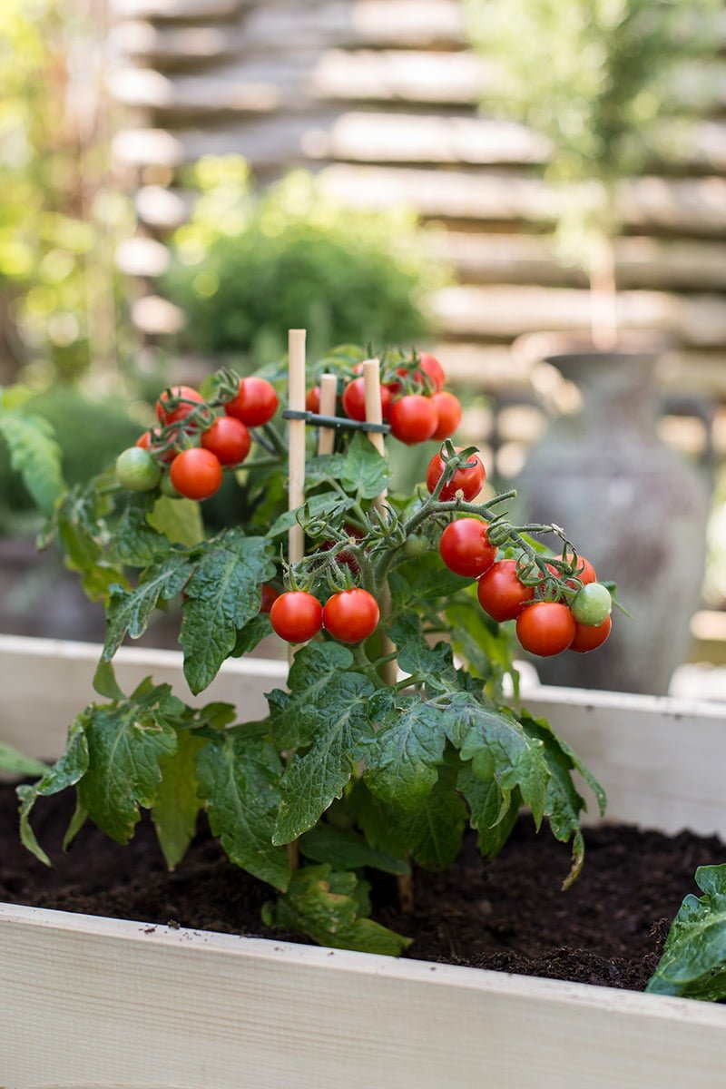 biojord plante tomat pallekarm
