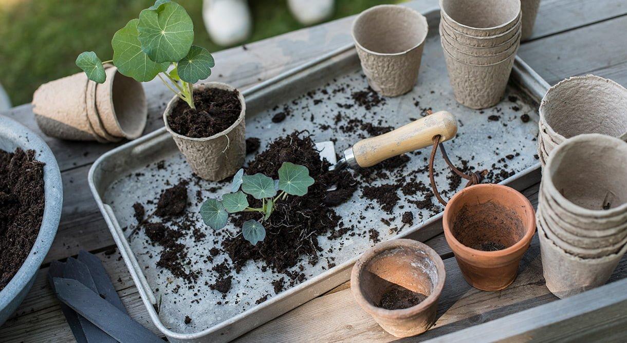 Planting av blomkarsestiklinger i pappotter med jord og hageredskap på trebord