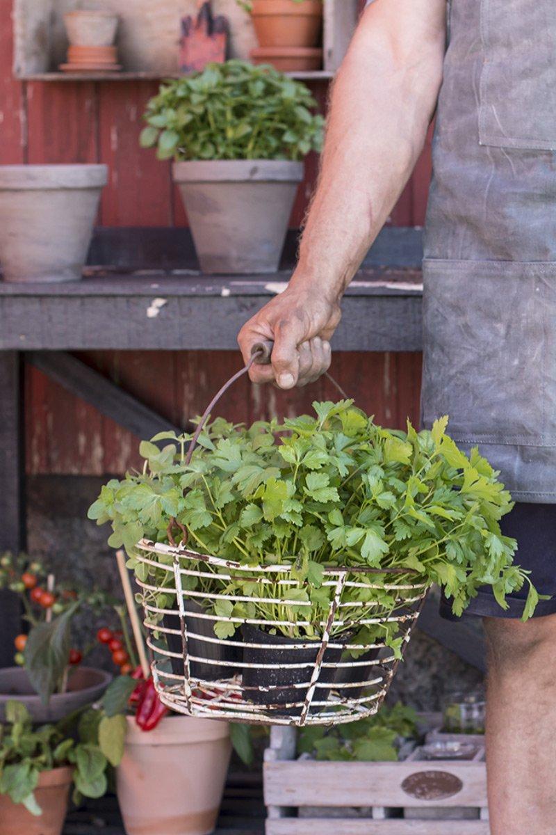Krydderhage krydder urter krydderurter økologisk