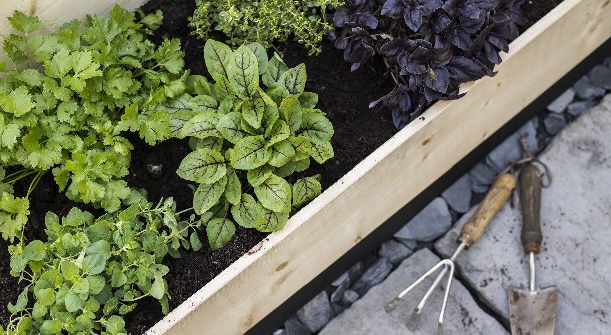Pallekarm utfylt med jord med krydderurter og hageredskap