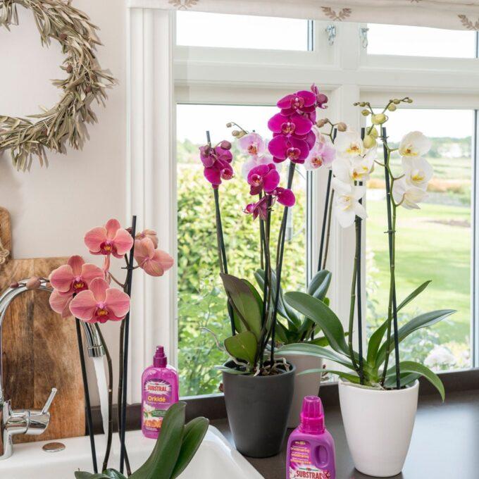 tre høye orkidépotter sort, hvit og brun, med orkideer i