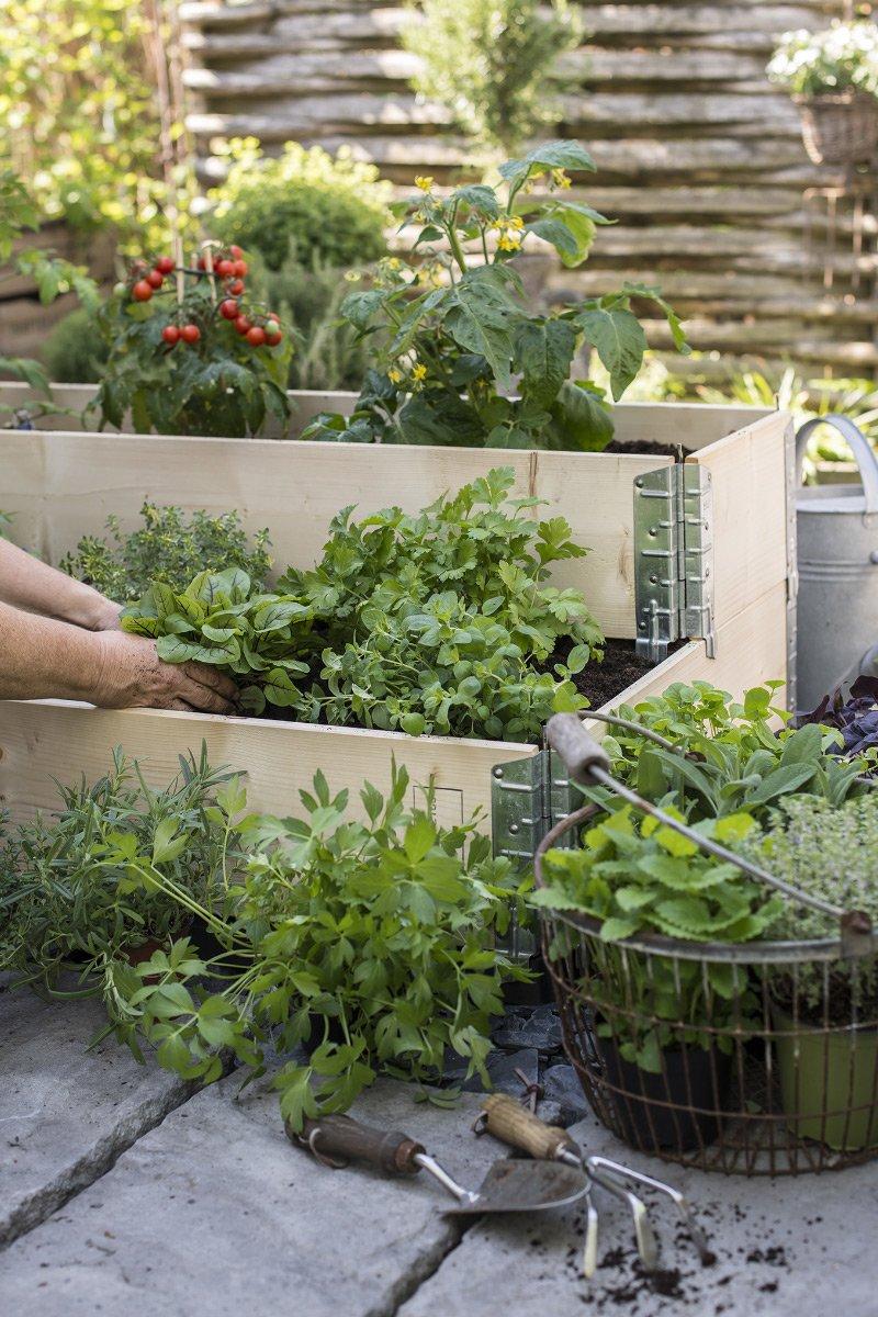 Krydderurter plantes i pallekarm