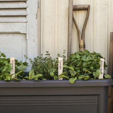 elho vekstbord med flotte, grønne urter